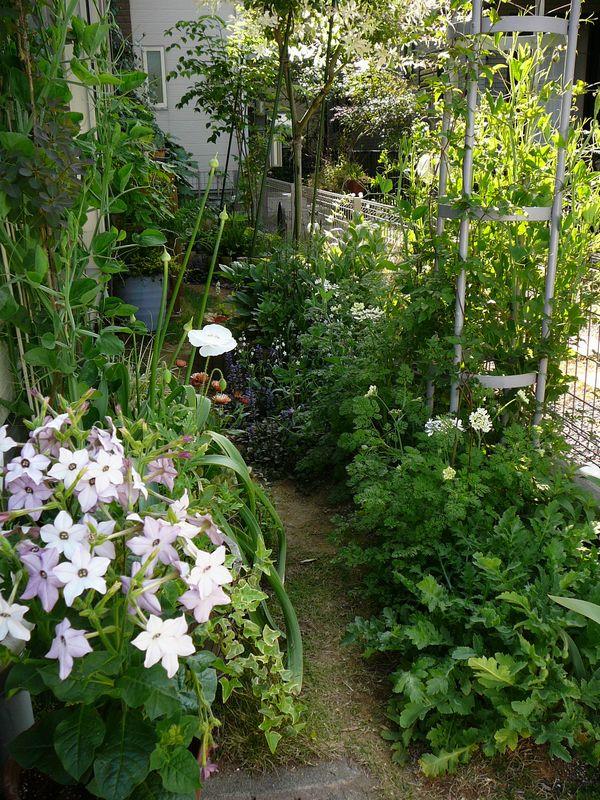 庭のアフター画像