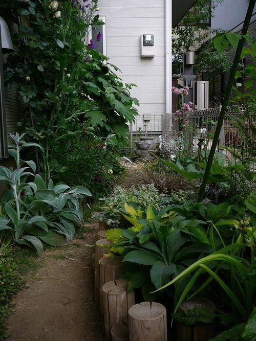 2015夏 南の庭 半日陰