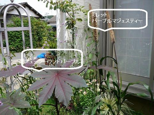 2015夏 南の庭 日向