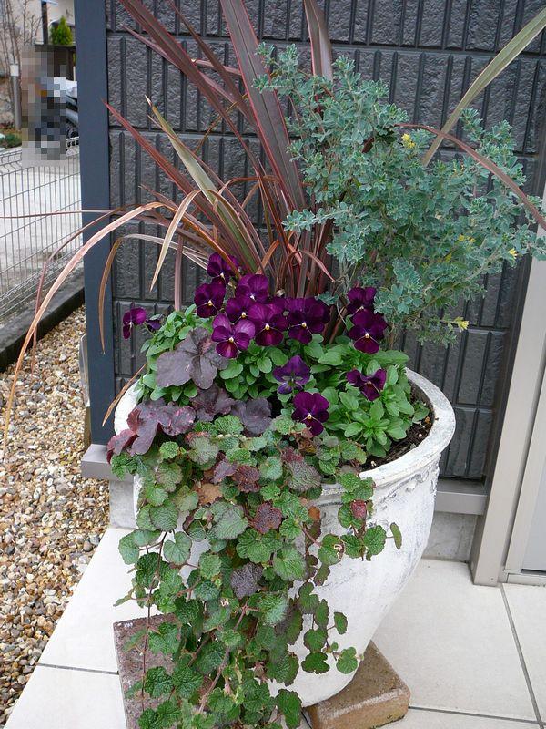 2015年冬 玄関寄せ植え