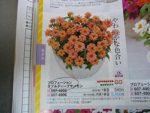 ジニア ダブルディープサーモン 2016年種注文