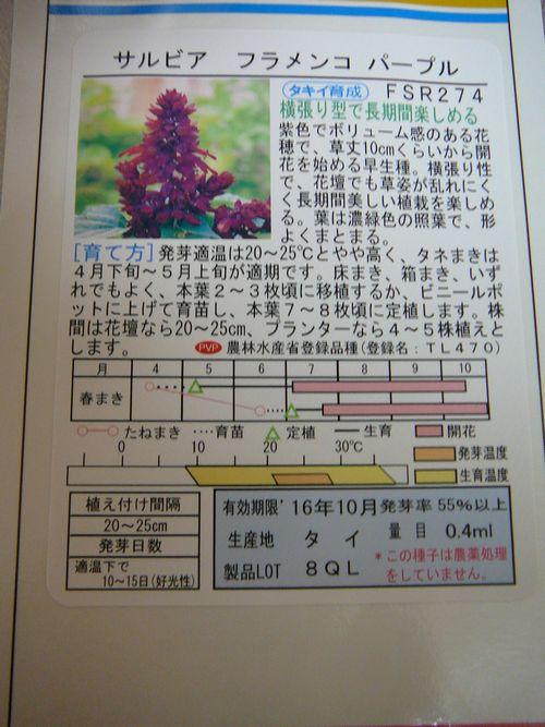サルビア フラメンコ パープル 種袋