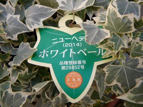 Kusukusuさん 購入苗3