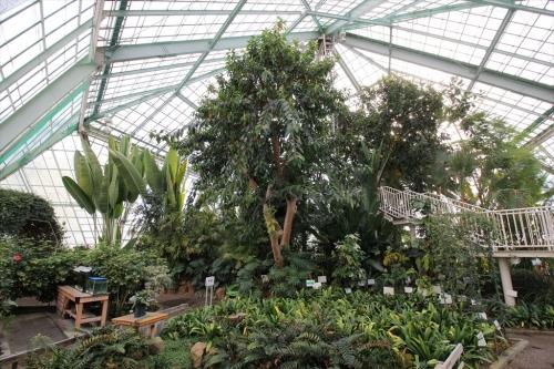 函館市営熱帯植物園 (15)_R
