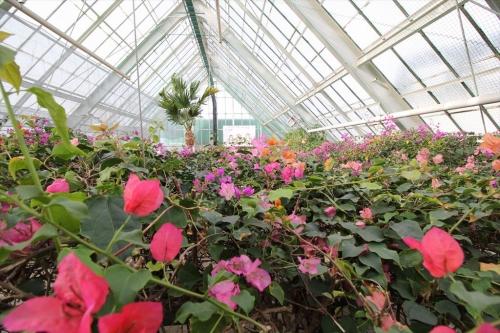 函館市営熱帯植物園 (16)_R