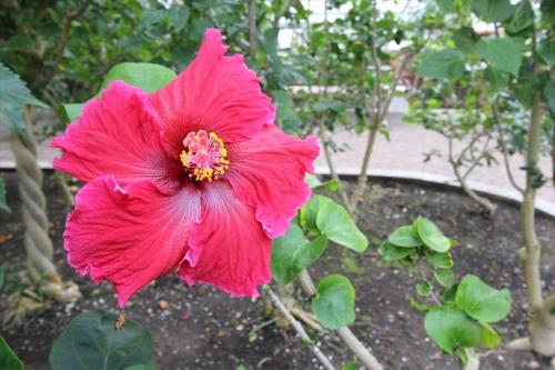 函館市営熱帯植物園 (32)_R