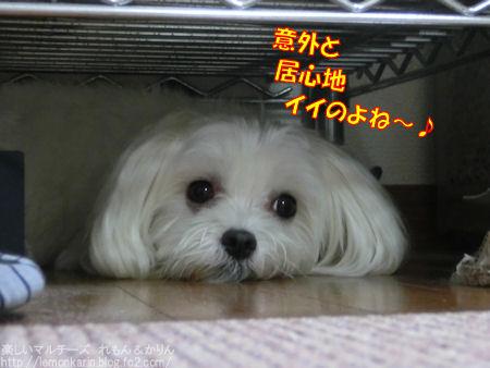 20151105_9.jpg