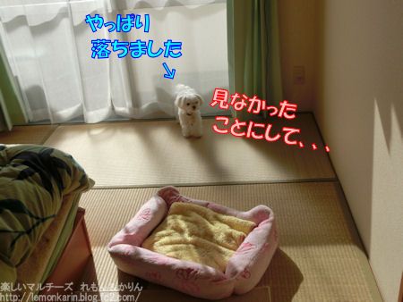 20151107_8.jpg