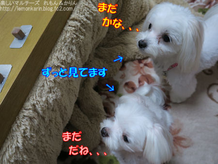 20151114_3.jpg