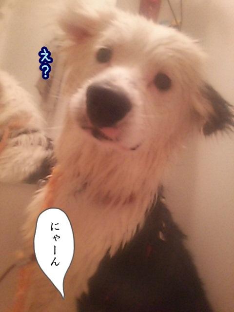 DSC_0916_20160126132047a88.jpg