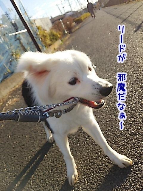 DSC_0978_201601211319466b1.jpg