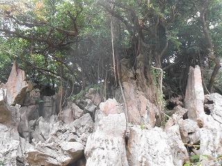 s-沖縄 2016・2 076