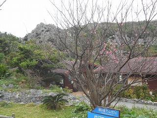 s-沖縄 2016・2 068