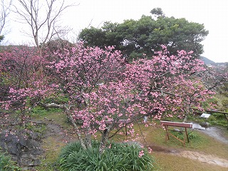 s-沖縄 2016・2 189