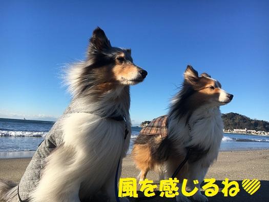 由比ヶ浜5