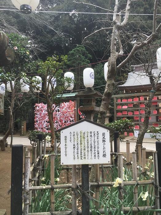 江ノ島02