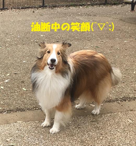 きぃちゃん2