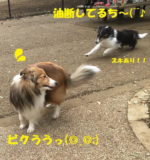 きぃちゃん3