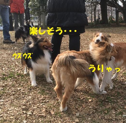 モモちゃん4
