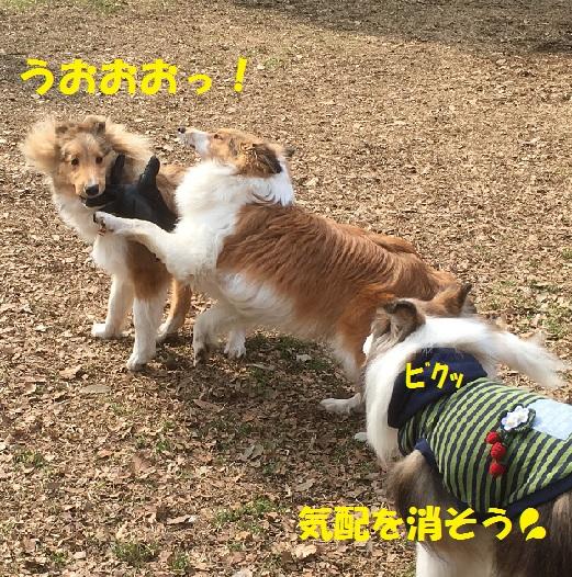 ココ&ラスタちゃん2