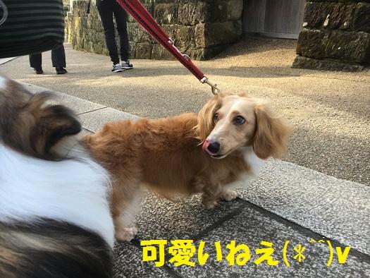 円覚寺96