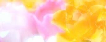 imagesXI6LXP2S.jpg