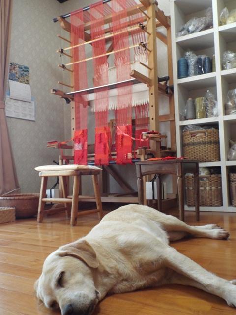 紅絹とラン