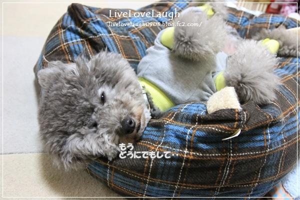 IMG_9199かばー5
