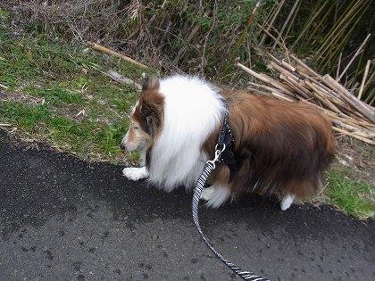 歩きます!