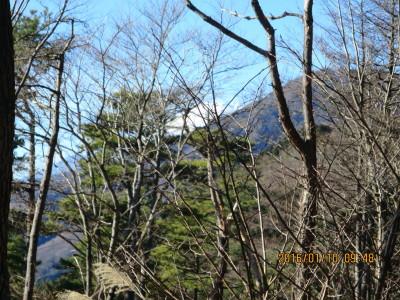 木々の間より富士山