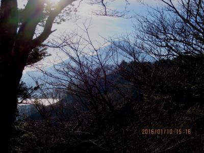 木の間より富士山と山中湖