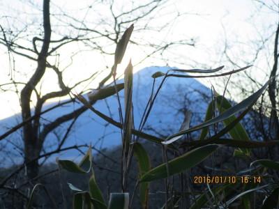 木の間より夕暮れの富士山