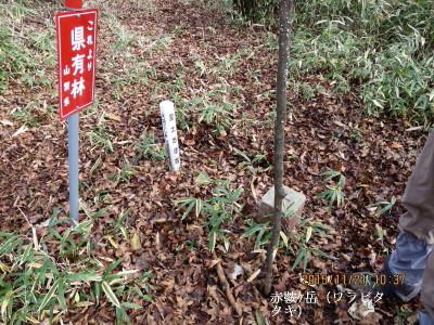 赤鞍ケ岳(ワラビタタキ)(三角点のみ山名見当たらず)