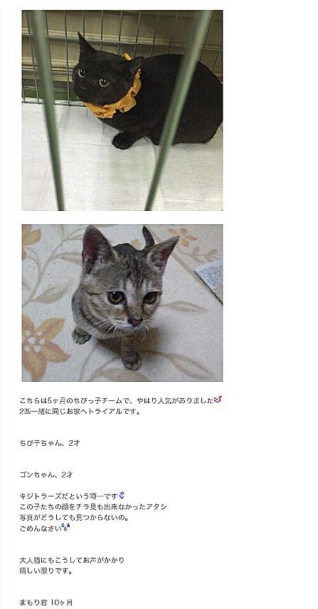 徒然にゃんぽみち-6