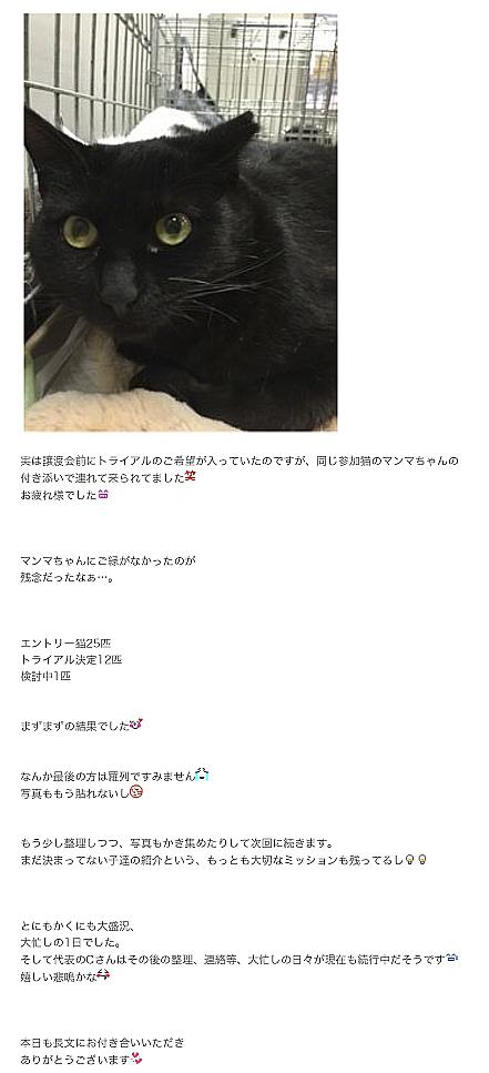 徒然にゃんぽみち-7