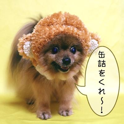 arashi003_2.jpg