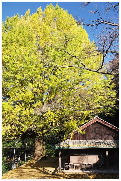 2015年12月1日 福定の大銀杏ツーリング (8)