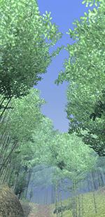 竹林を走る