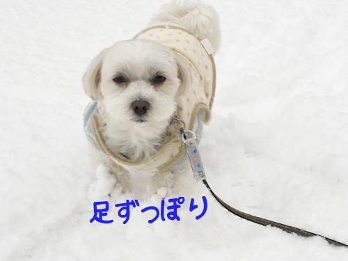 大雪散歩3