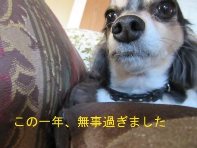 IMG_1369sd.jpg