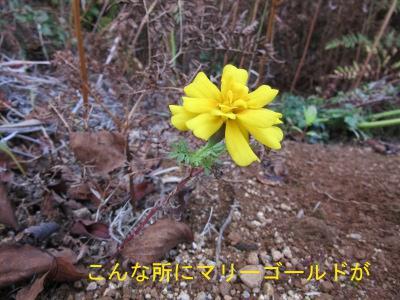 IMG_2094sd.jpg