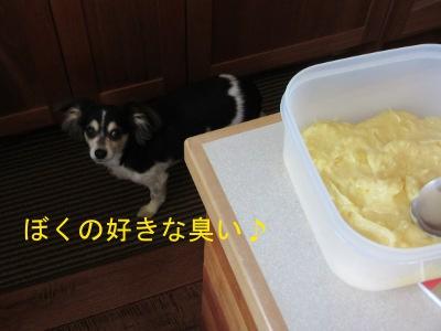 IMG_4037sd.jpg