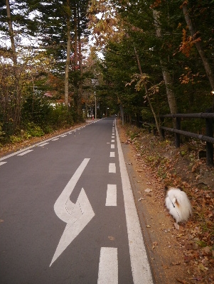 2015軽井沢4