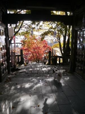 2015軽井沢2−12