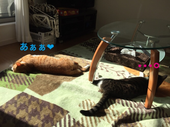 fc2blog_2015102614460574f.jpg