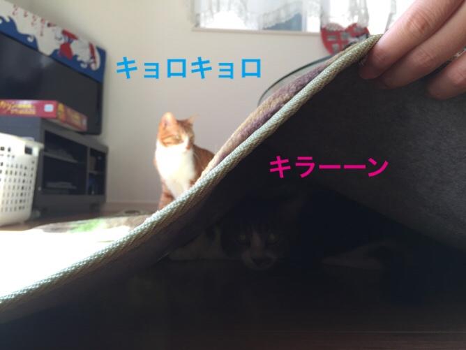 fc2blog_201510271705073d9.jpg