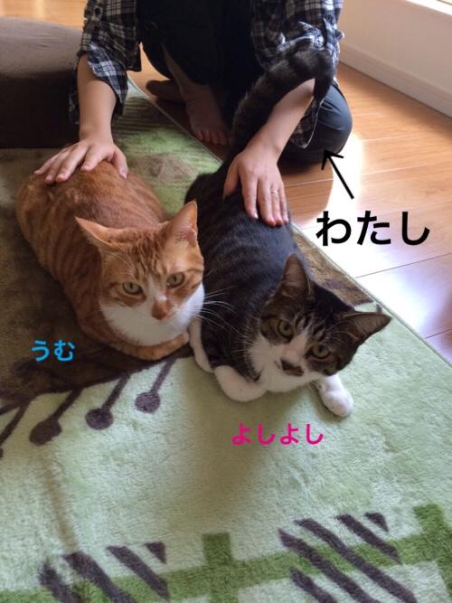 fc2blog_2015112118422776b.jpg