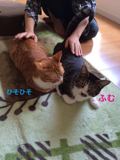fc2blog_20151121184319e84.jpg