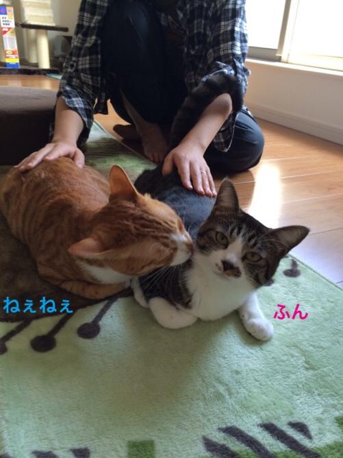 fc2blog_20151121184407e5f.jpg
