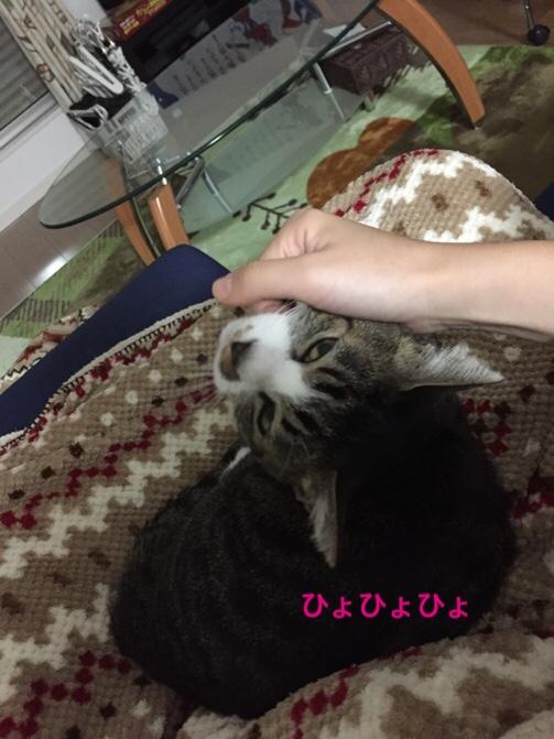 fc2blog_20151124214841e67.jpg